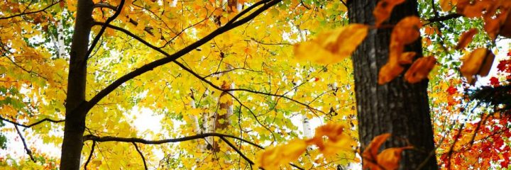 The Autumn Leaves… Drift Past MyWindow…